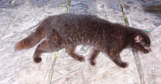 Кот кодкод. Всем котам кот